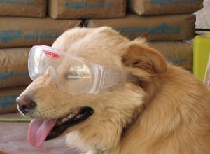 Head of Security, Ima Finedog.